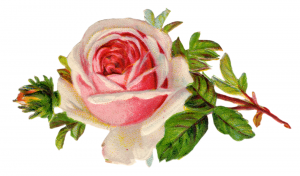 Free-Vintage-Rose-Clip-Art-By-FPTFY